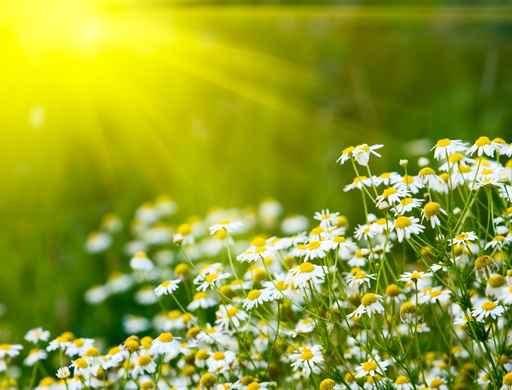 Resultado de imagen de flores y el sol