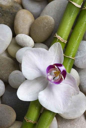 Murales zen orqu dea bamb y piedras for Imagenes zen